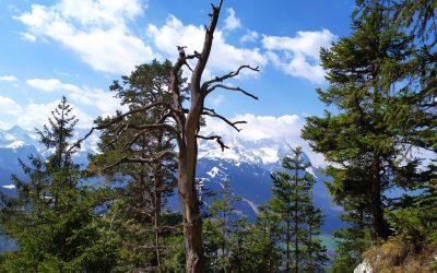 Berge – eine Leidenschaft, die uns nicht loslässt
