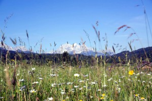 Blumenwiese Alpenwelt Karwendel